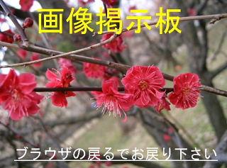 katukatuの画像掲示板